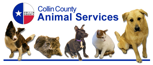 Click Here for Collin County Animal Services Homepage